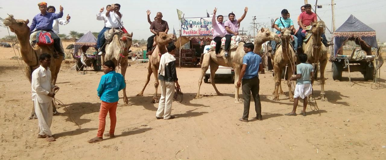 JM Camel Safari